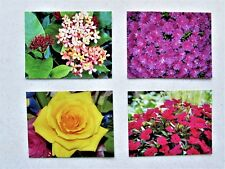 Photograph Postcard Set of 4 Originals, All Occasions, Blank