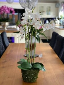 Artificial Phalaenopsis white orchids on moss mound 70cm height
