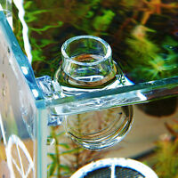 Clear Glass Bubble Tank Plant Crystal Shrimp Fish Feeding Cup Basin w/