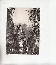BF27833 chamois tace au massif du mont blanc   france  front/back image