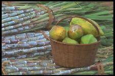 296002 caña de azúcar y cesta de frutas A4 Foto Impresión
