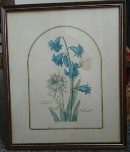 Pretty Floral framed print of Spring Bulbs with Latin names made by M.W.R / PTVB