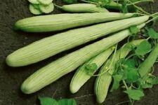 Cucumber Armenian Seeds cucumbers organic non gmo Ukraine 0.5 g Farmer's dream