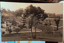 SINGAPORE, Photo Post Card 1924 GARDENS, PALMS