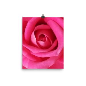 Beautiful pink rose poster
