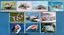 Beautiful Set of 10 Brand NEW Turtle Postcards by Cavalier Postcards 89M