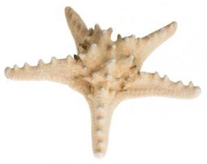 NaDeco® Noppen Seestern natur 10-15cm | Deko Seestern | Großer Seestern | mariti