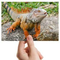 "Photograph 6x4"" - Iguana Lizard Gecko Reptile Art 15x10cm #14144"