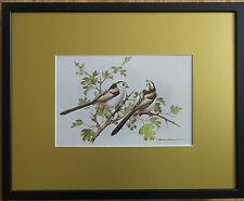 Basil Ede, 20''x16'' frame, Framed Bird wall art, Long Tailed Tits print