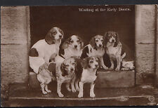 Animals Postcard - Group of Dogs -  Waiting At The Early Doors  V1365