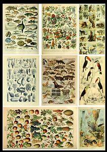 A3 Birds Animal Flowers Trees Sea Life Botanical Wildlife Identification Poster