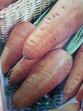 ZANAHORIA CHANTENAY carrots  1500 Semillas Seeds semi