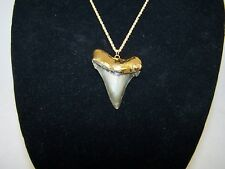2.09 Inch CHUBUTENSIS Fossil Shark Tooth Teeth 18K Gold Plated Pendant