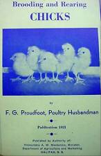 Brooding & Rearing Chicks Chickens Poultry Husbandman Husbandry Booklet 1952