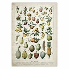 Botanical Educational Flora Vegetable Poster Mushrooms Placard  Botanics Lover