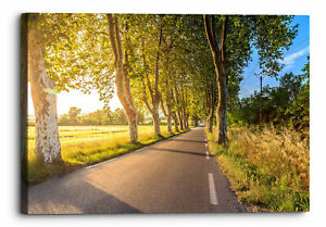 Forest Road Sunlight Trees Nature Canvas Wall Art Picture Home Decor