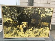 David Shepherd Pride of Lions Print Used With Frame 31 x 20 Used