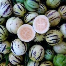 20 Samen Wild-Pepino - Tzimbalo - Solanum caripense - essbar - Mini-Melone