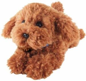 Pet loss pet death dog puppy toy poodle apricot Brown