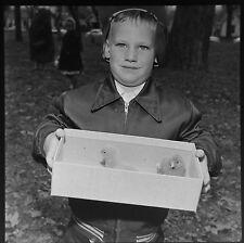 DL8224A Press Photo 2x2 Negative Kansas 1958 Easter Egg Hunt Little Boy Chicks