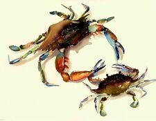 Delaware Blue Crabs 8.5X11 Watercolor Maryland Beach Decor art print by Singer