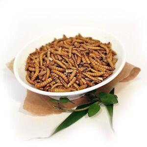 MEHLWÜRMER ZUM KOCHEN - Essbare Insekten von Snack-Insects zum Kochen & Essen