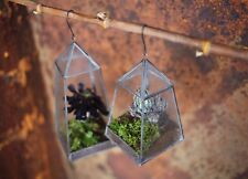 Terrarium - Cactus Succulent Planter Pot - Hanging - Glass -  Aculu by Nkuku