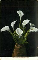 DB Postcard CA K220 California Calla Lilies in a Vase Cancel 1912 Weidner