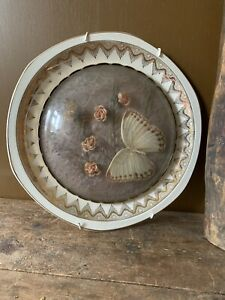 Vintage Butterfly Taxidermy in Glass Dome Mounted on Plate Lace & Flower Inlay