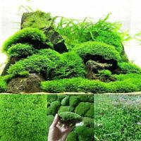 Micro Moss Aquatic Green Plants Carpet Aquarium Garden Landscape Home Decoration