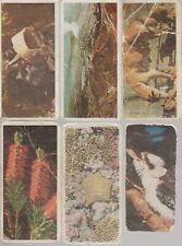 6 x LYONS TEA. AUSTRALIA. 1959.
