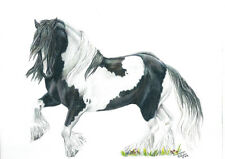 """""""Kil Chohawno"""" (Dancing Wizard) Gypsy Vanner ~ Gypsy Cob ~ Gypsy Horse   cards"""