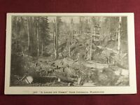 Centralia Washington Logging Antique Photo Postcard Vintage