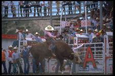 331076 Bull Riding A4 Photo Print