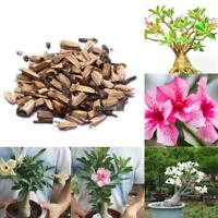 50pcs Adenium Obesum Seeds Desert Rose Seeds Bonsai Flower Seeds Garden EHE8