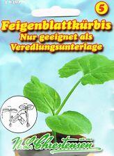 Feigenblattkürbis nur geeignet als Veredlungsunterlage  Kürbis Saatgut 464029