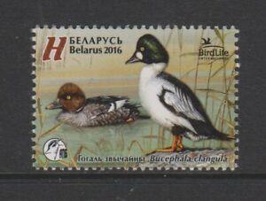 Belarus - 2016, Common Goldeneye, Bird stamp - MNH - SG 1092