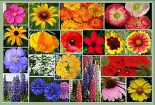 1 Tbsp Mixed Wildflower (30 Kinds!) Perennial Flower Seeds *Flat Shipping + Gift