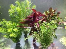 40 Aquariumpflanzen Wasserpflanzen Aquarium Bunter Mix gegen Algen (? 0,41/Stk.)