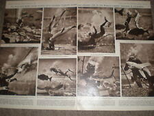 Photo article Aquarium Marineland of the Pacific Hollywood USA 1955 ref Z