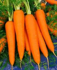 1 oz Carrot Seeds, Danvers 126, Heirloom Carrots Seeds, Bulk Seed, Approx 20,000