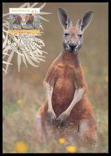 AUSTRALIA MK FAUNA KANGAROO KÄNGURU MAXIMUMKARTE CARTE MAXIMUM CARD MC CM h0693