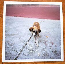 """SIGNED - ALEC SOTH - DOG DAYS BOGOTA - 6"""" x 6"""" MAGNUM ARCHIVAL PRINT"""