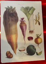 Ancienne affiche 34x49cm légume autrefois Vilmorin Melon d'Amérique Poireau
