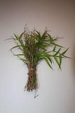 079687 Leonardo Bund Bambus ca 32cm Grün Super Deko Artikel sehr Naturgetreu