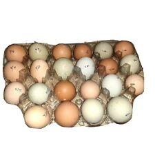 One Dozen - Assorted barnyard mix fertile chicken hatching eggs - Fast Shipping