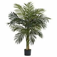 "4"" Golden Cane Palm Tree"