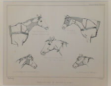 1895 Antique Print HORSE BANDAGING & BRONCHOTOMY Lithograph Mounted