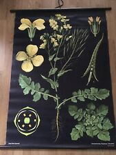 BEAUTIFUL VINTAGE STYLE WALLOGRAPHY XLARGE BOTANICAL WALL HANGING Yellow Flower