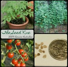 50 ORGANIC CHERRY TOMATO SEEDS - NON GMO HEIRLOOM Easy Fast Growing Tasty